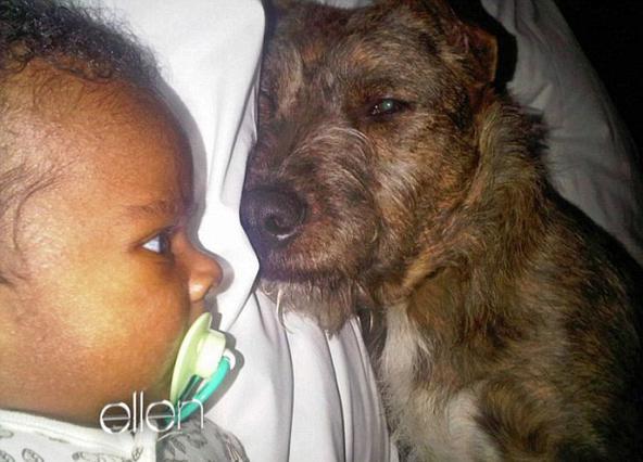Ο γιος της Σαρλίζ Θερόν, Τζάκσον, έχει μάθει να ζει με τα δύο σκυλάκια της μαμάς του από την πρώτη μέρα που μπήκε στο σπίτι της και οι σχέσεις τους είναι ήδη άψογες. Μάλιστα τα συμπαθή τετράποδα εκτελ