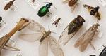 Έντομα: Εξαφάνισε τα με φυσικούς τρόπους