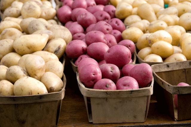 Τα πάντα για την πατάτα