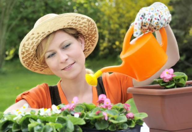 Δεν χρειάζεται να ξοδέψεις μια περιουσία για να σώσεις τον κήπο σου το καλοκαίρι