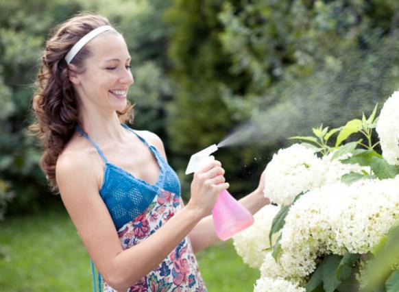 Αν ψεκάζεις τα φυτά σου  ιδιαίτερα το απόγευμα,  τα δροσίζεις, πράγμα που  το έχουν μεγάλη ανάγκη.
