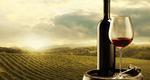 Τα σωστά ποτήρια για κρασί (λευκό, ροζέ & κόκκινο)