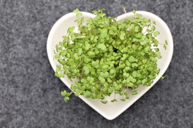 Φύτρα: Καλλιέργησέ τα και... στην υγεία σου!
