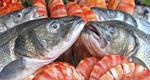 Πόσο επικίνδυνα είναι τα ψάρια;