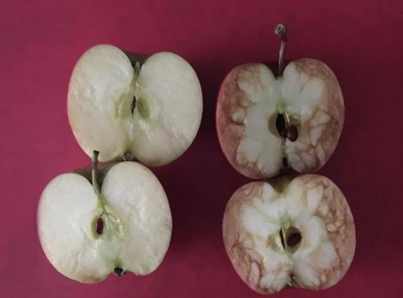 Το τεστ του μήλου: Έξυπνος τρόπος για να εξηγήσεις στα παιδιά τι είναι μπούλινγκ