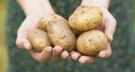 Μην φυλάς τις πατάτες στο ψυγείο!