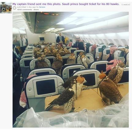 Γεράκια ταξιδεύουν σε αεροπλάνο