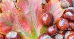 Κάστανα, τα οφέλη του χειμωνιάτικου καρπού για τον ανθρώπινο οργανισμό