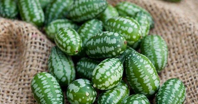 Γνωρίστε το Cucamelon, το πιο χαριτωμένο φρούτο που θα δείτε ποτέ