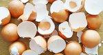5 πράγματα που δεν φαντάζεσαι ότι τρώγονται