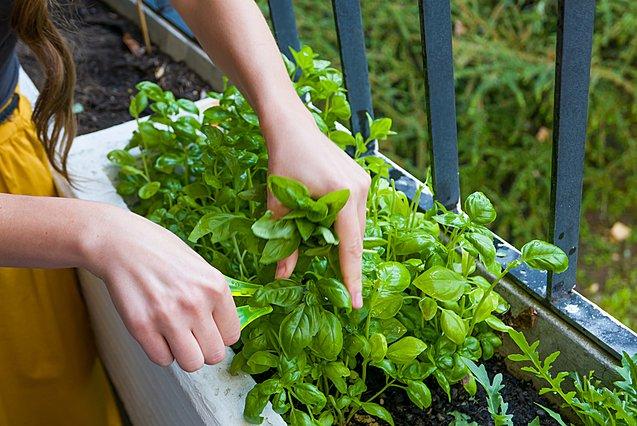 4 βότανα που δίνουν εξαιρετική γεύση στο φαγητό σου και μπορείς να τα καλλιεργήσεις στο σπίτι