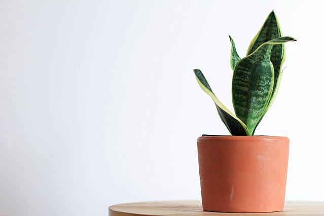 Τα φυτά που θα σε βοηθήσουν να κοιμηθείς καλύτερα