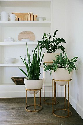 5 καλαίσθητα φυτά εσωτερικού χώρου για να δώσεις προσωπικότητα στο σπίτι σου