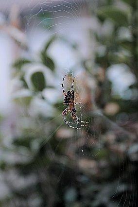 Αράχνες: Γιατί πρέπει να το ξανασκεφτείς πριν τις εξολοθρεύσεις από το σπίτι σου