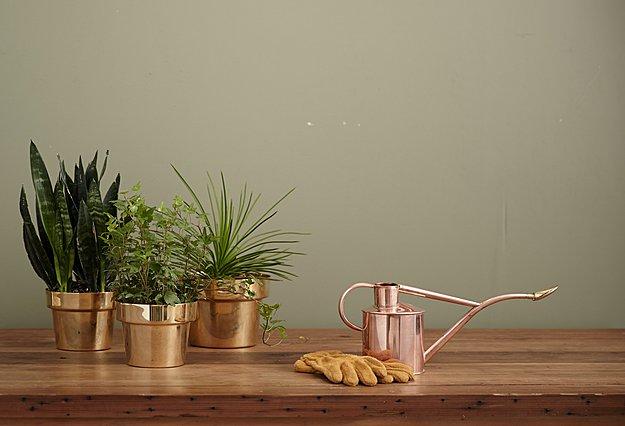 Όλα όσα πρέπει να ξέρεις αν είσαι αρχάρια...κηπουρός!