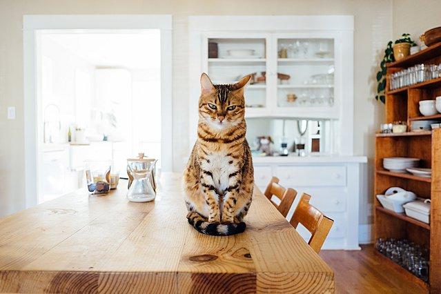 Τα οφέλη του να έχεις σαν κατοικίδιο μια γάτα