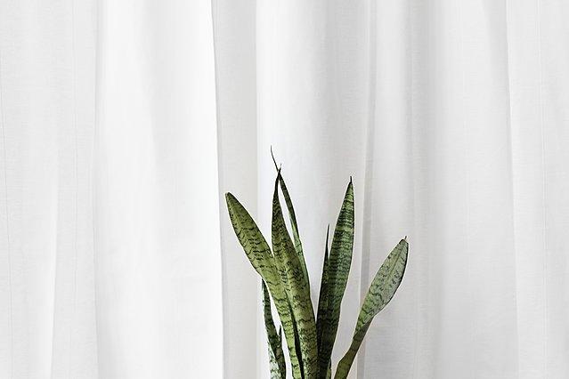 Τα φυτά που επιβιώνουν χωρίς ηλιακό φως