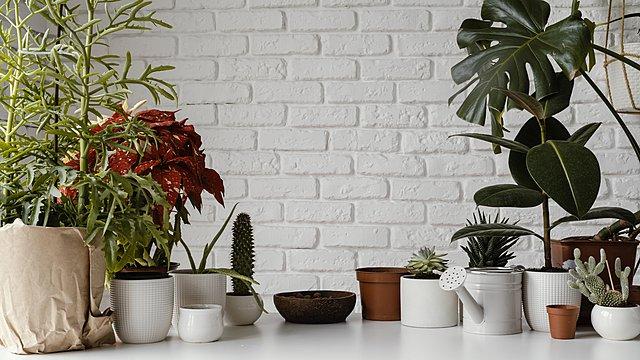 4 απλοί τρόποι για να διατηρείς υγιή τα φυτά εσωτερικού χώρου