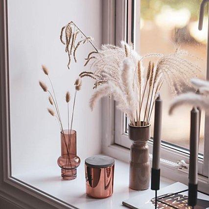Το φυτό που αξίζει να βάλεις στο χώρο του σπιτιού σου