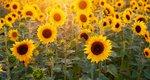 Θερινό ηλιοστάσιο: Πώς θα επηρεαστούν τα ζώδια από τη μεγαλύτερη μέρα του χρόνου